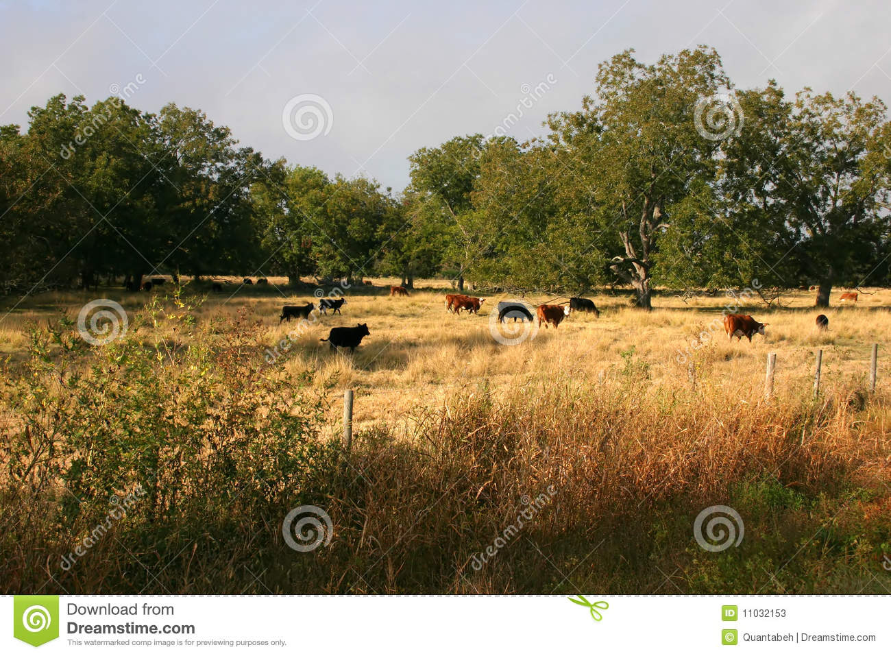 Grass-fed beef by the numbers