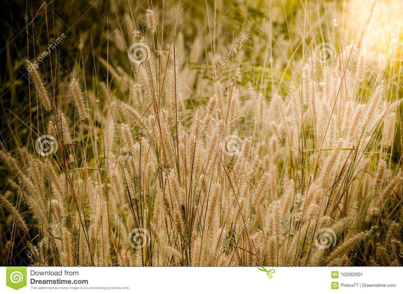 Grass flower field with sun ray effect above
