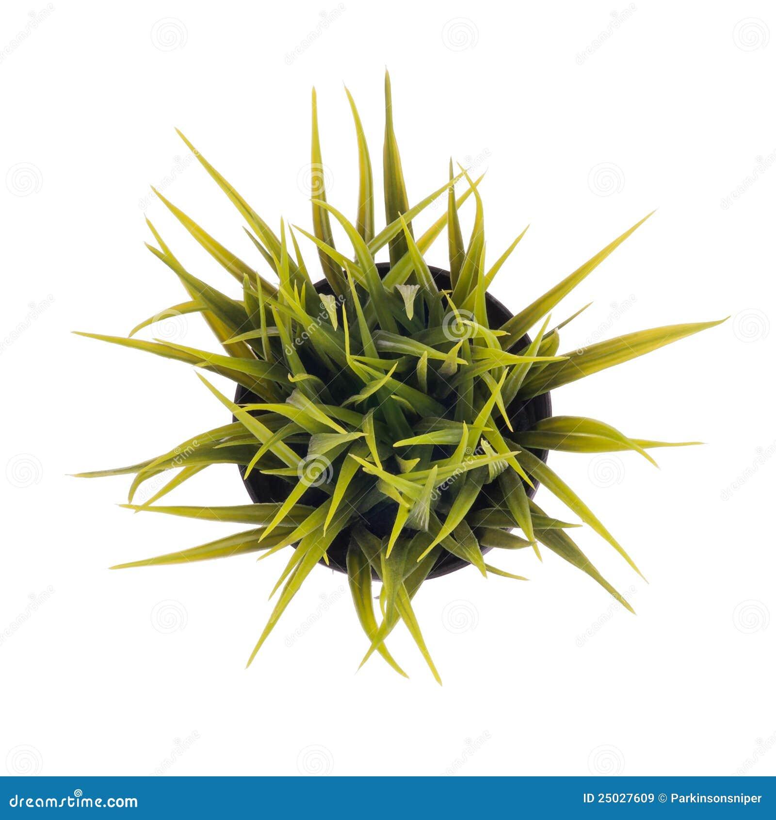 Pequeno Lama Vulcânica argila Flor Mesa Vaso de Bonsai