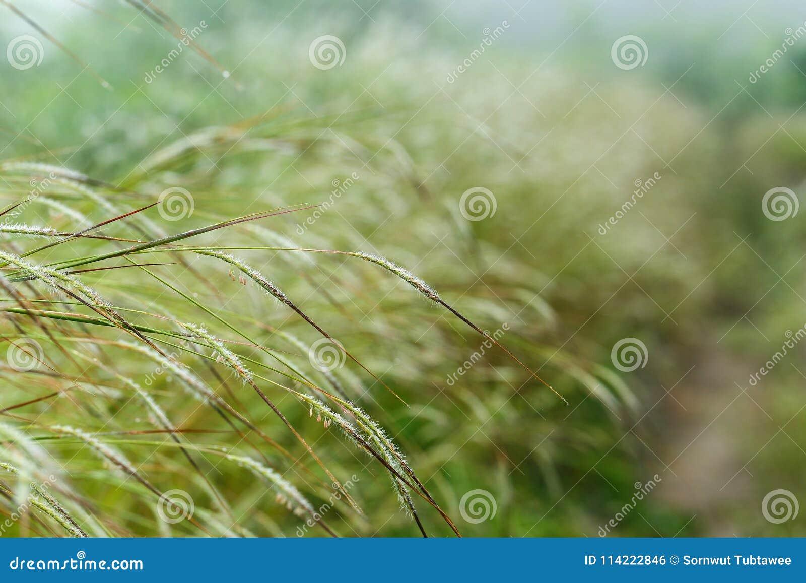 Grass flower with sun light.
