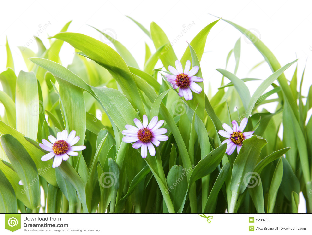 Grass and flowers stock photo image of rural fresh for Grass flower