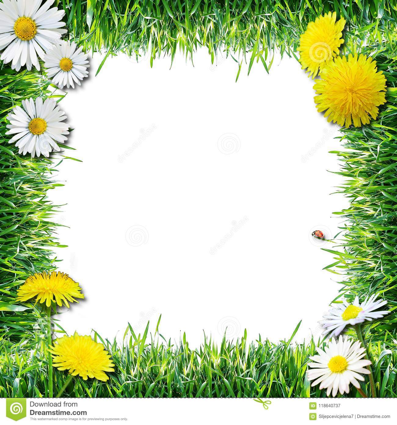 Grass And Flowers Spring And Summer Natural Frame White Background