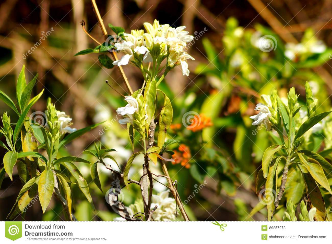 Grass Flowers And White Mind Blowing Flowers Stock Photo Image Of