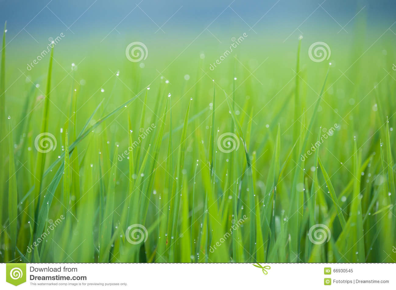 how to make grass green in spring