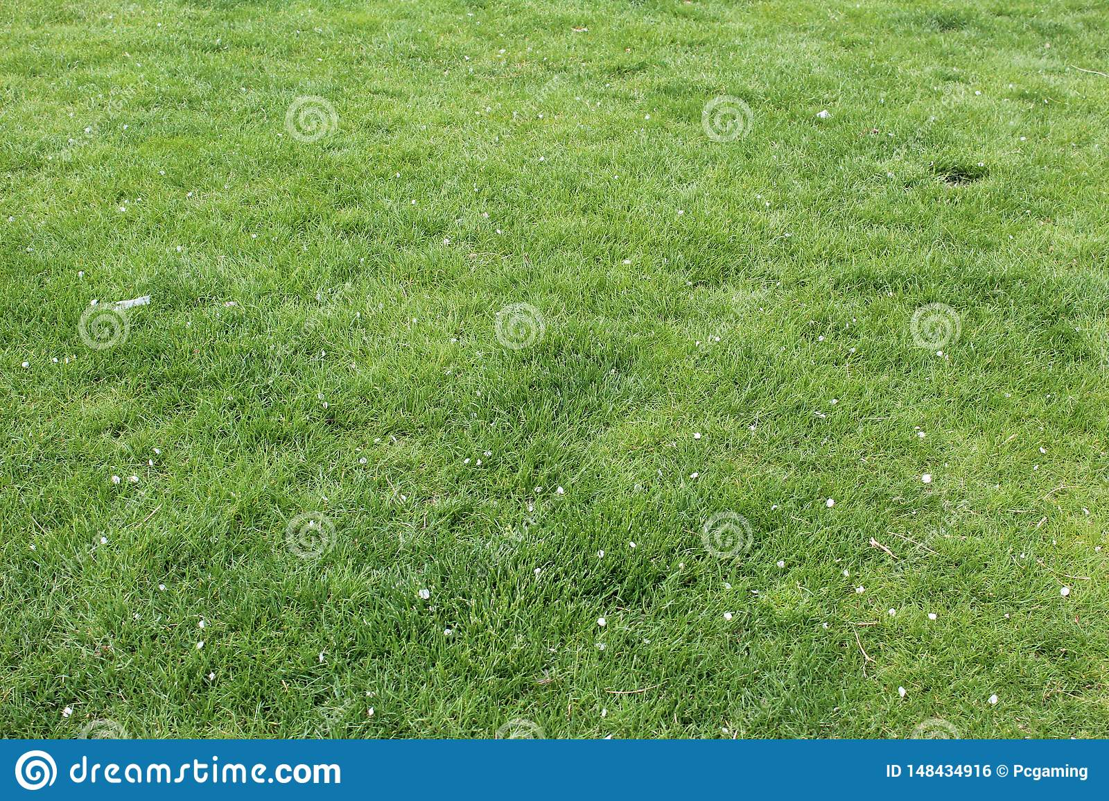 Grass greenish yellow