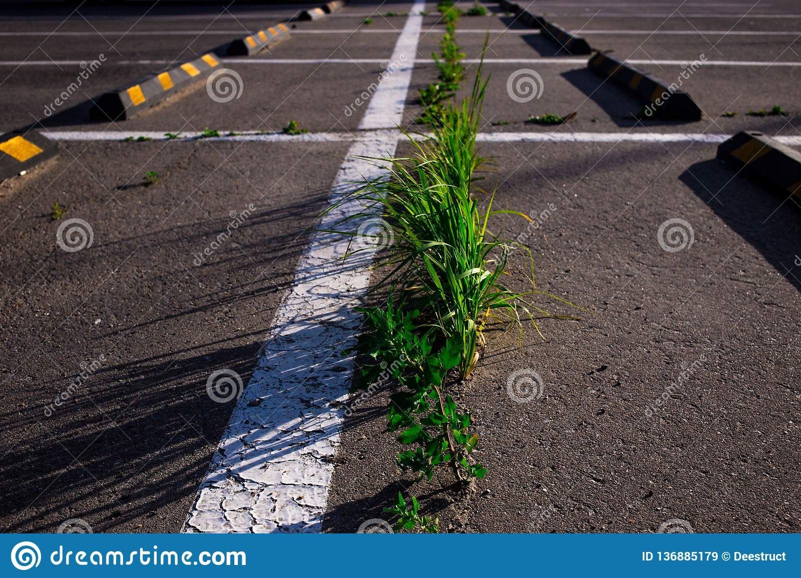 grass growing through the asphalt in the Parking lot in summer