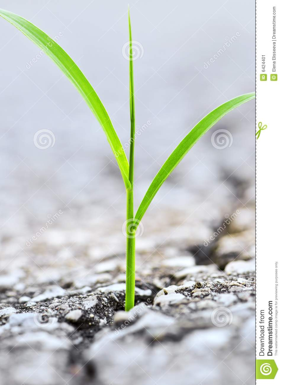 Grass growing from crack in asphalt