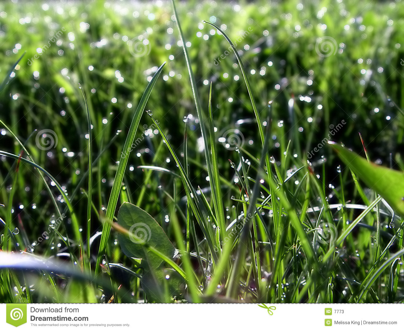 Grass on Lawn