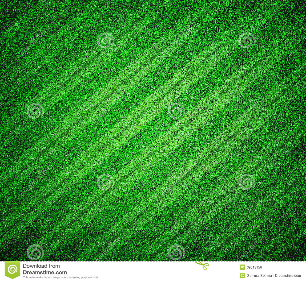 grass lined football or soccer field