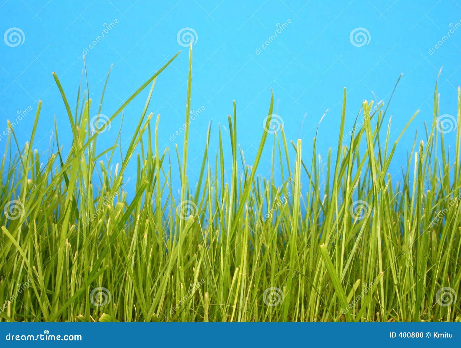 grass macro photography - photo #14
