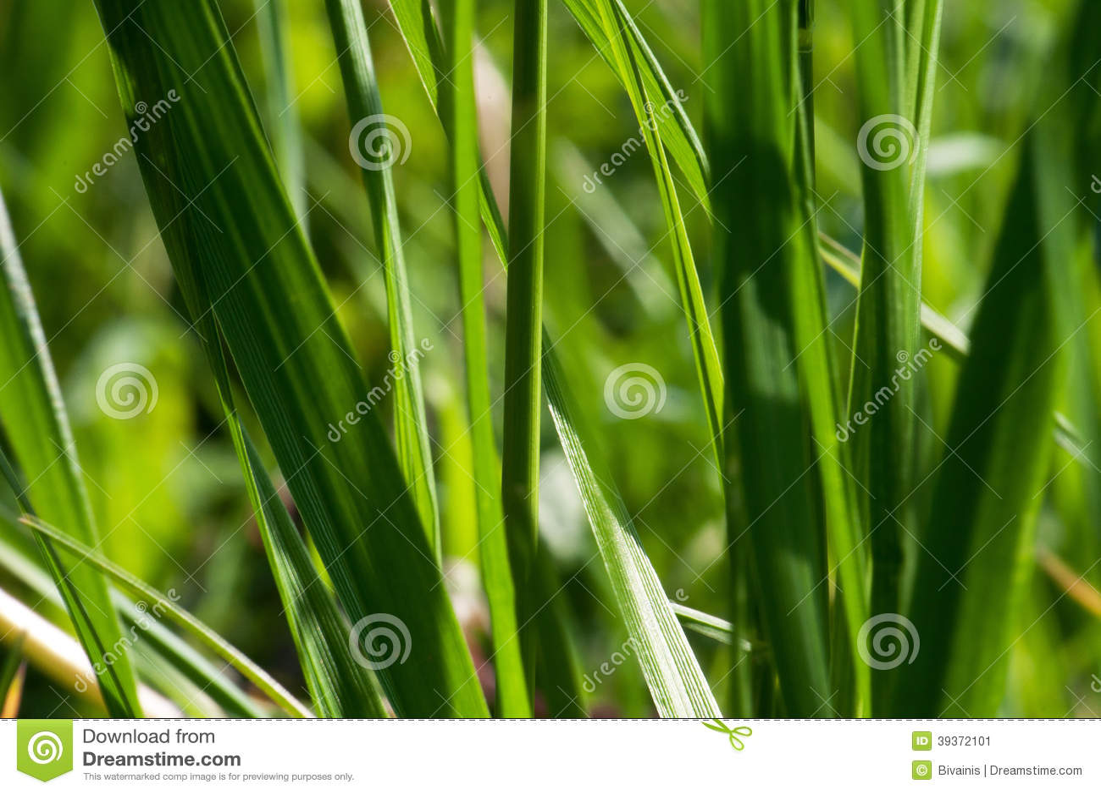 grass macro photography - photo #37