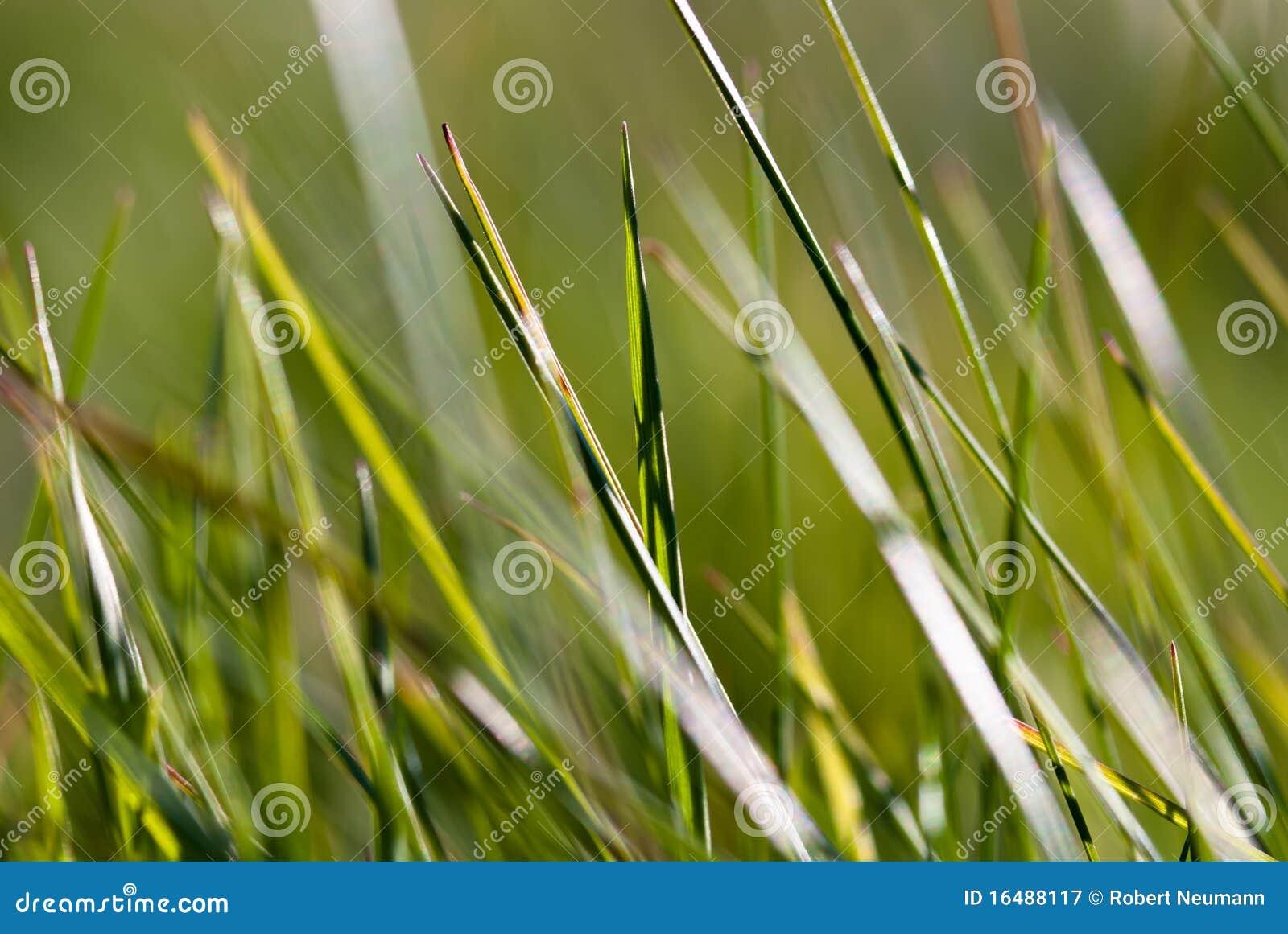 grass macro photography - photo #47