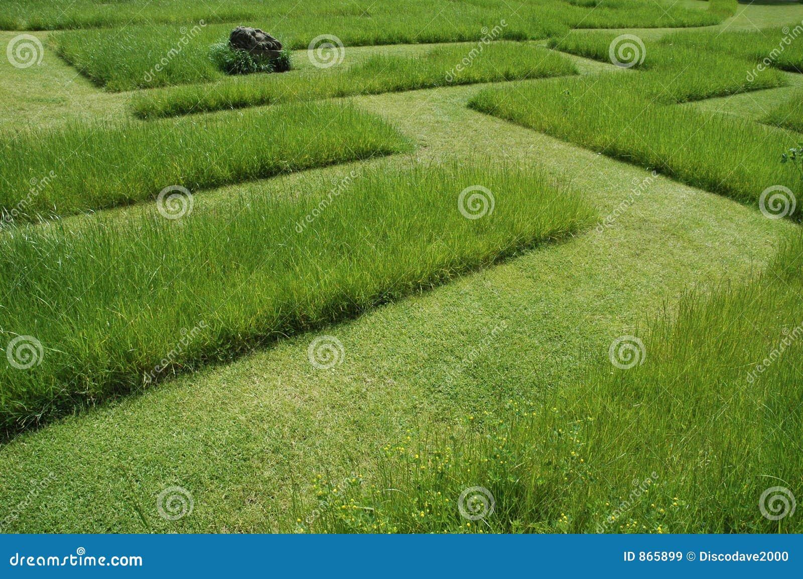 Grass maze 2