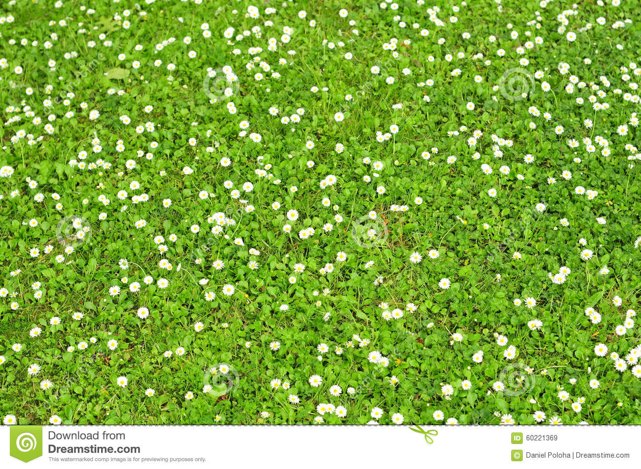 Grass pattern stock photo image 60221369 grass green pattern tiny white dhlflorist Image collections