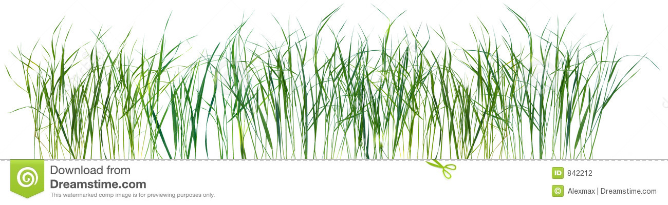 Grass pattern texture isolated