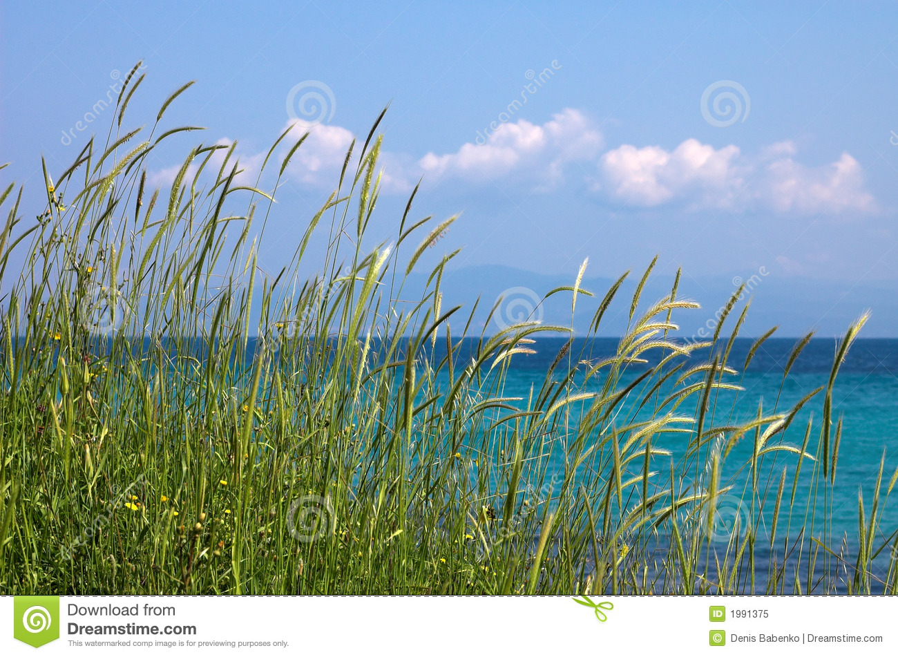 Grass sea ans blue sky royalty free stock photo image for Seagrass for landscaping