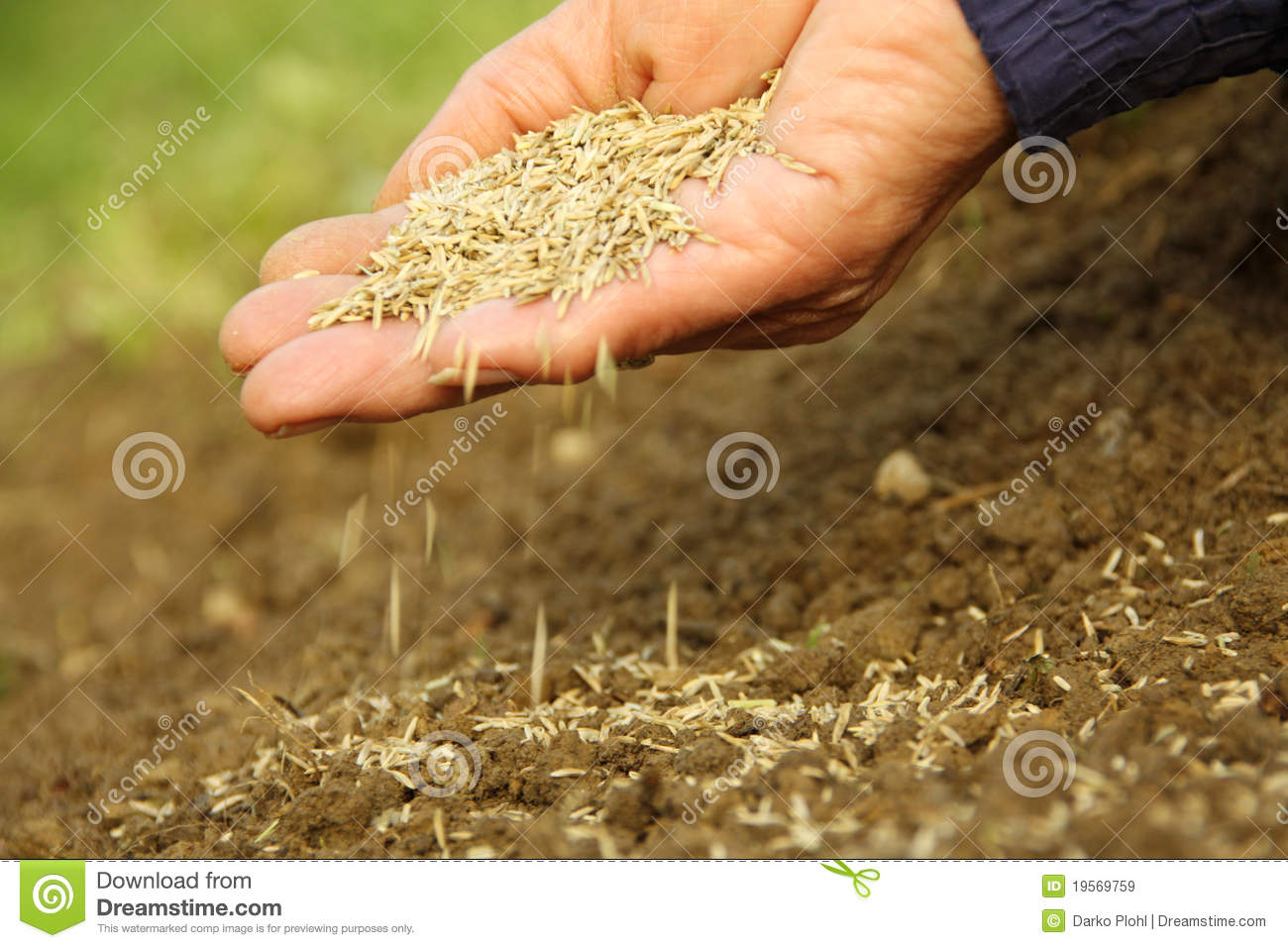 Grass Seed Sowing Royalty Free Stock Images Image 19569759