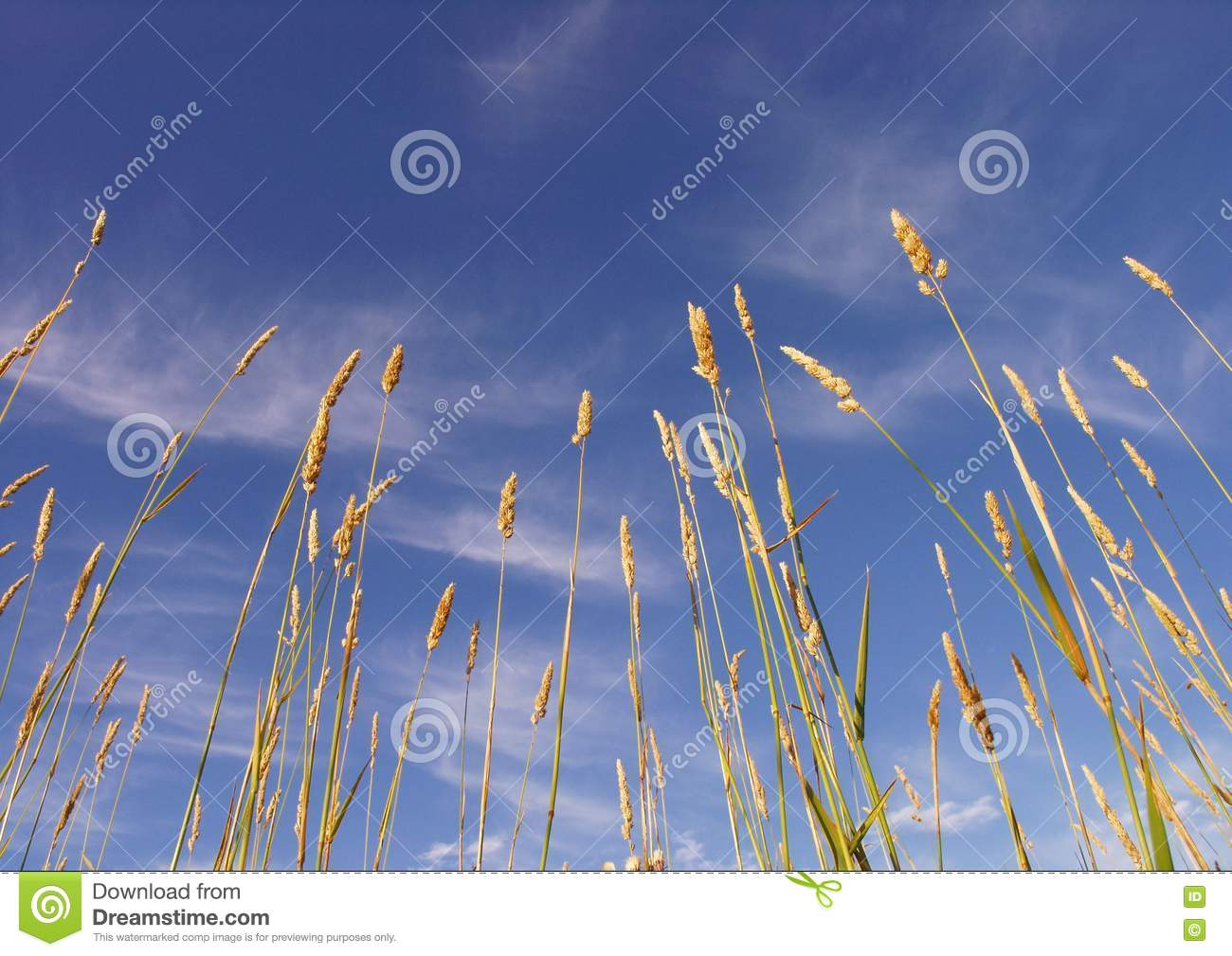 Stock Images  Grass And Sky Picture. Image  5983184 5462681297d