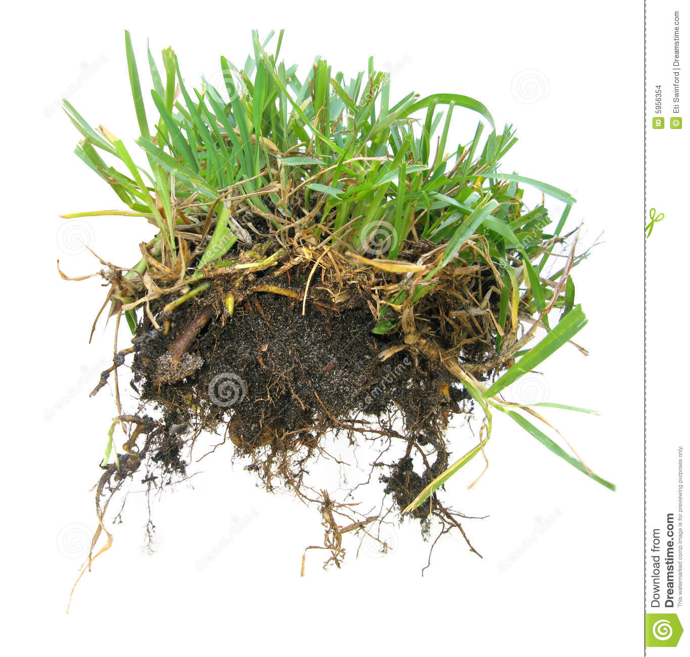 Grass Sod Stock Images - Image: 5956354
