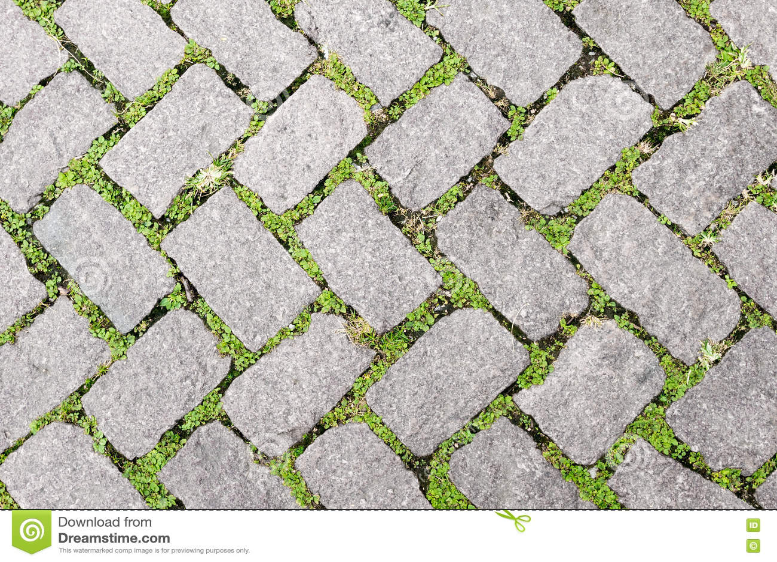 grass stone floor texture pavement design stock image image of