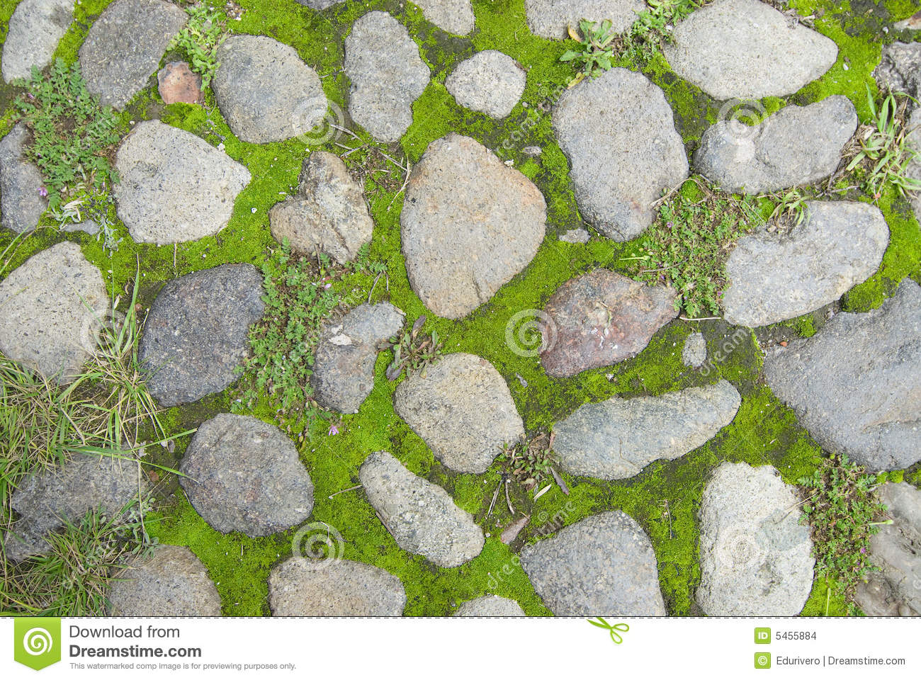 Grass And Stone Texture Stock Photo Image Of Paving Aged