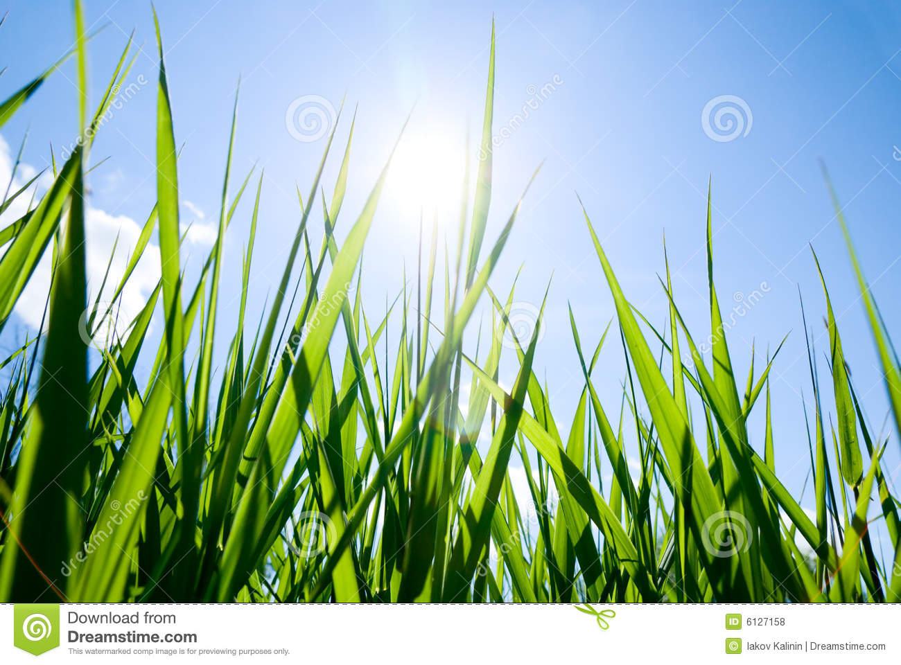 Grass And Sun Royalty Free Stock Photos Image 6127158