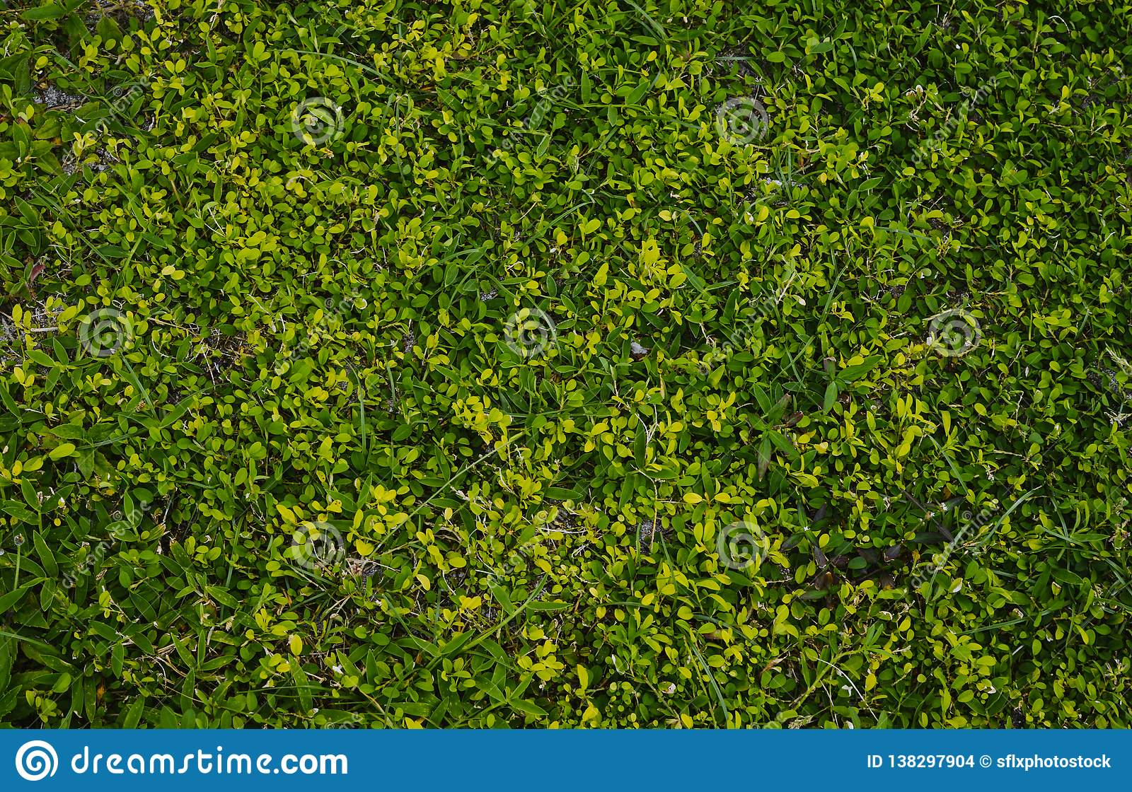 Grass texture with multiple shades of green