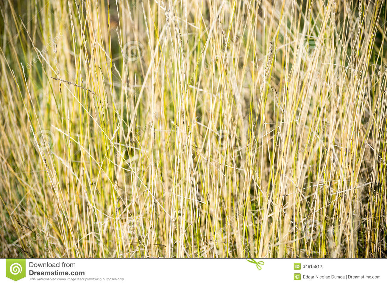 The gallery for --> Tall Grass Seamless Texture