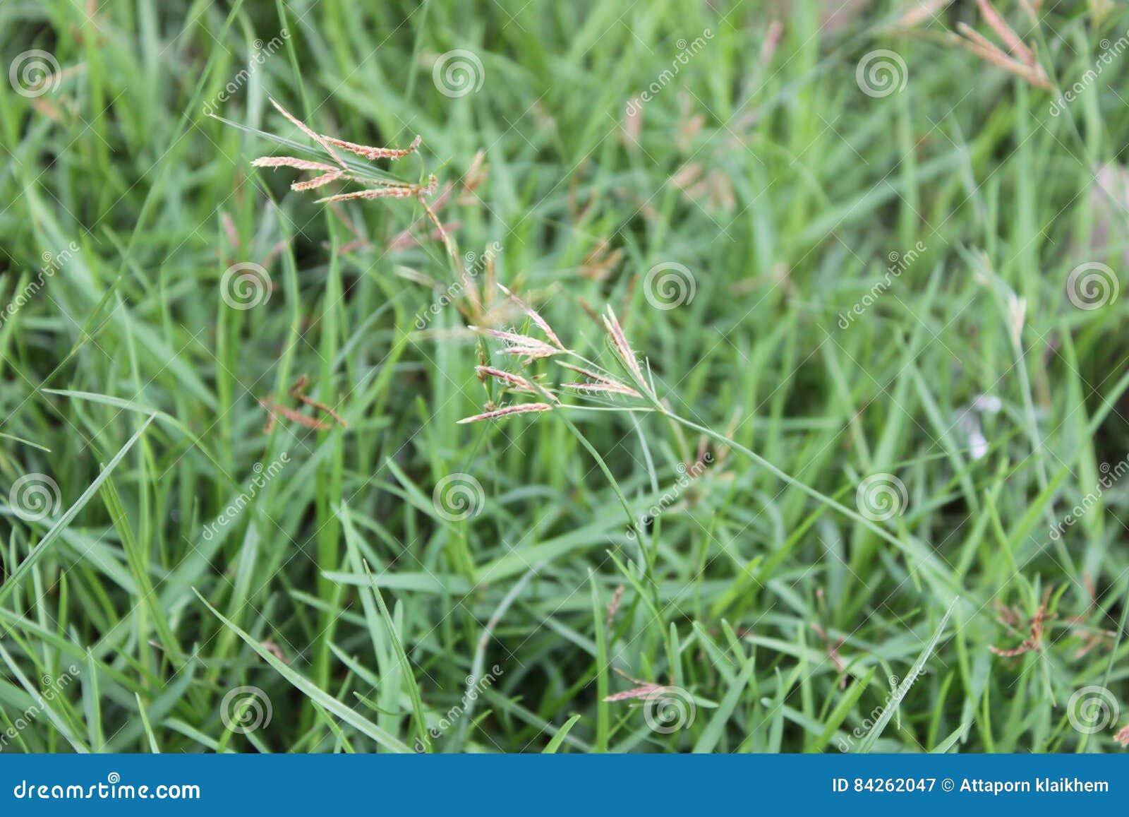 Grass of tree