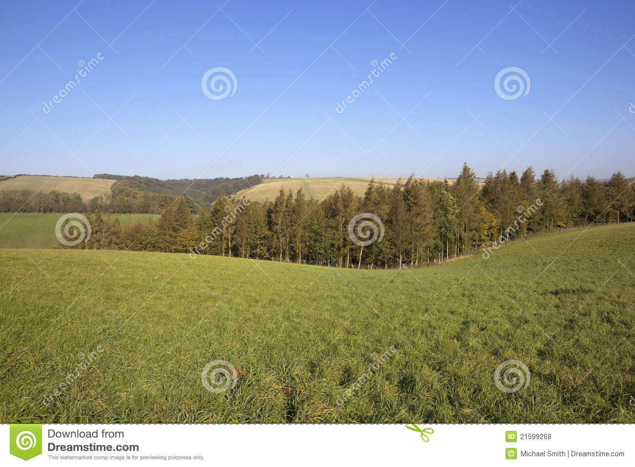 Grass Trees And Blue Sky Royalty Free Stock Photos - Image ...
