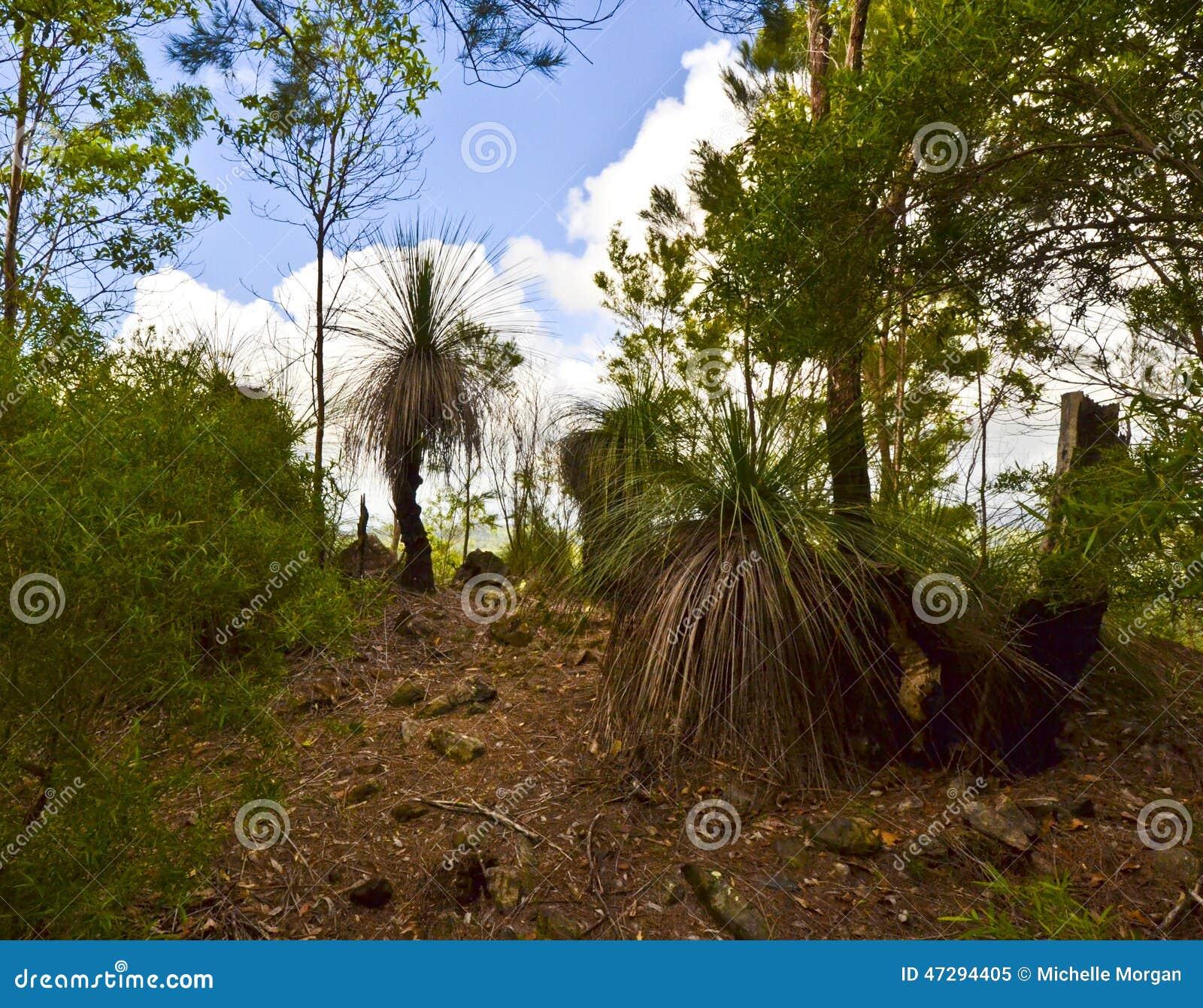 Trampoline Springs Sunshine Coast: Grass Trees On Mt Tinbeerwah, Sunshine Coast, Queensland