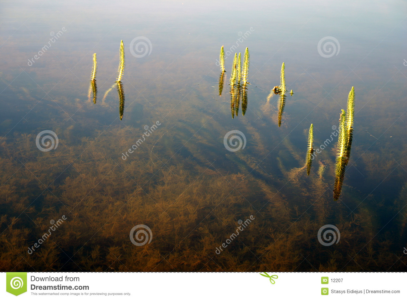 Download Grass in the water stock image. Image of lake, blue, green - 12207