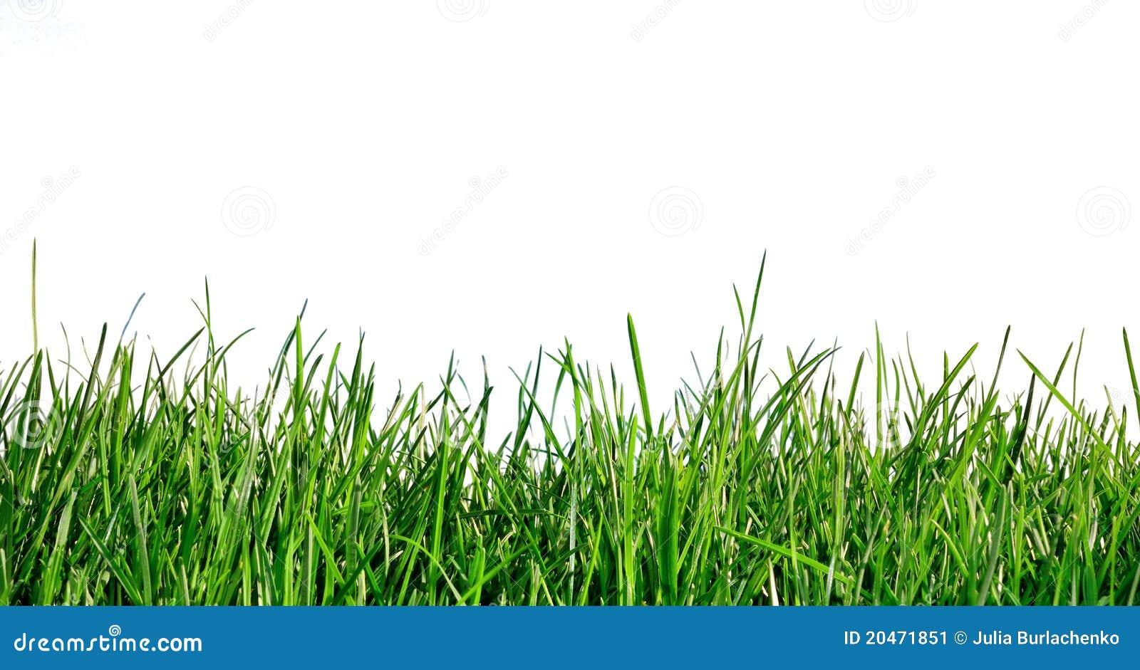 grass on white background stock image image 20471851