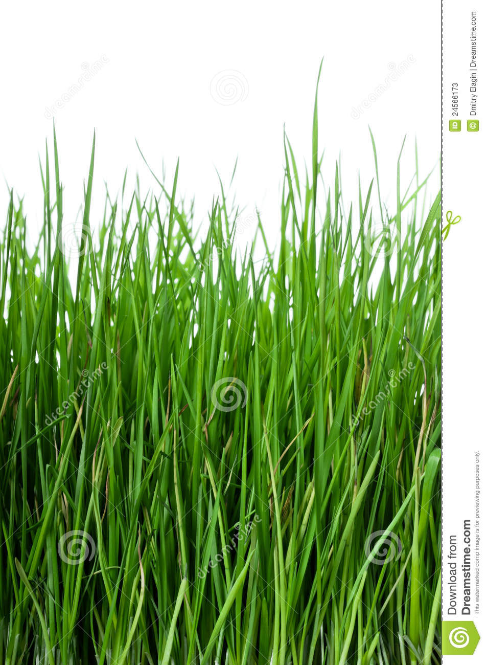 Grass on white background vertical stock photos image 24566173