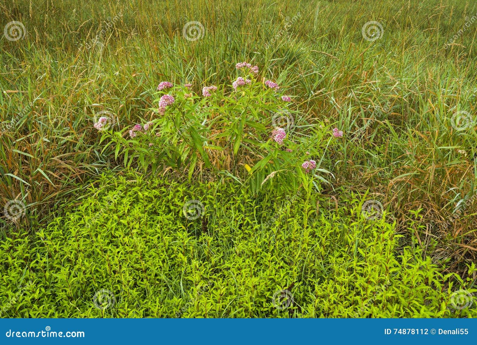 Grassen en groundcover op gebied