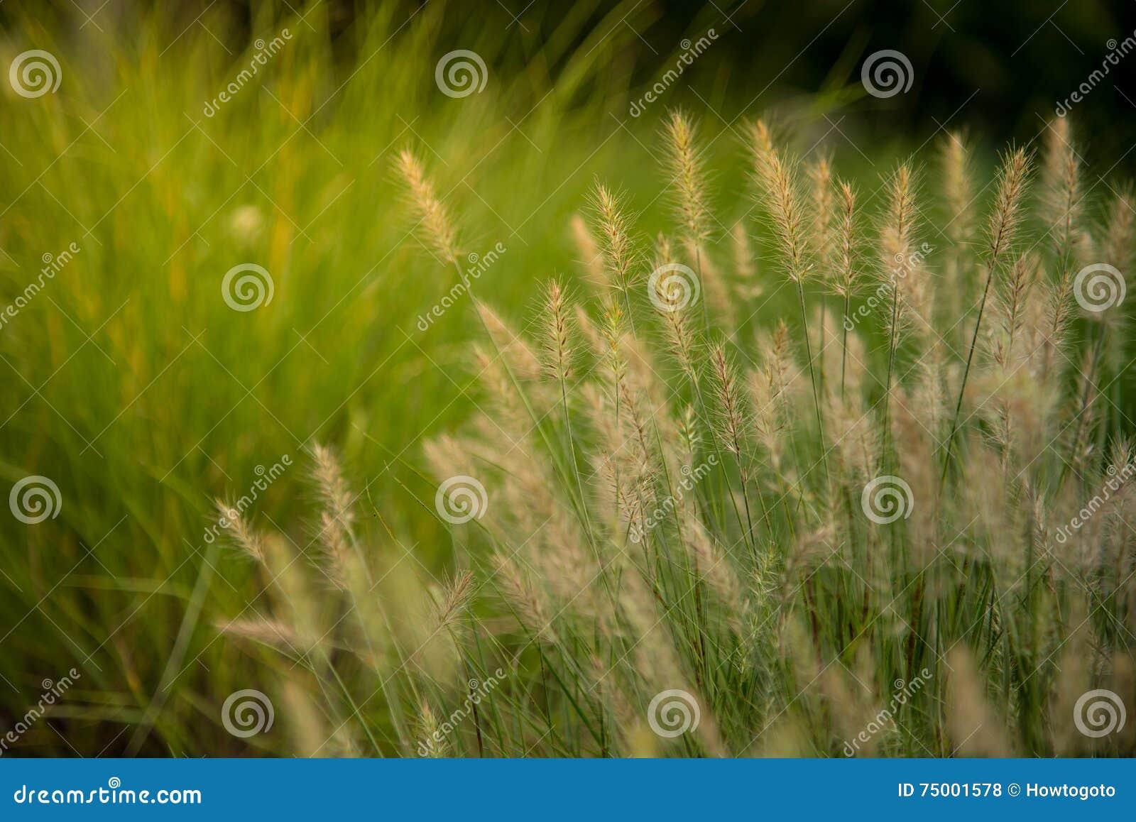 Grassengebied op de zonsopgang