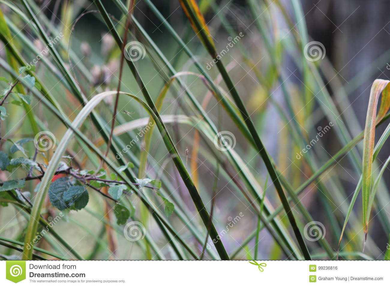 Grasses in English garden, closeup, with lavender and small flowes 3