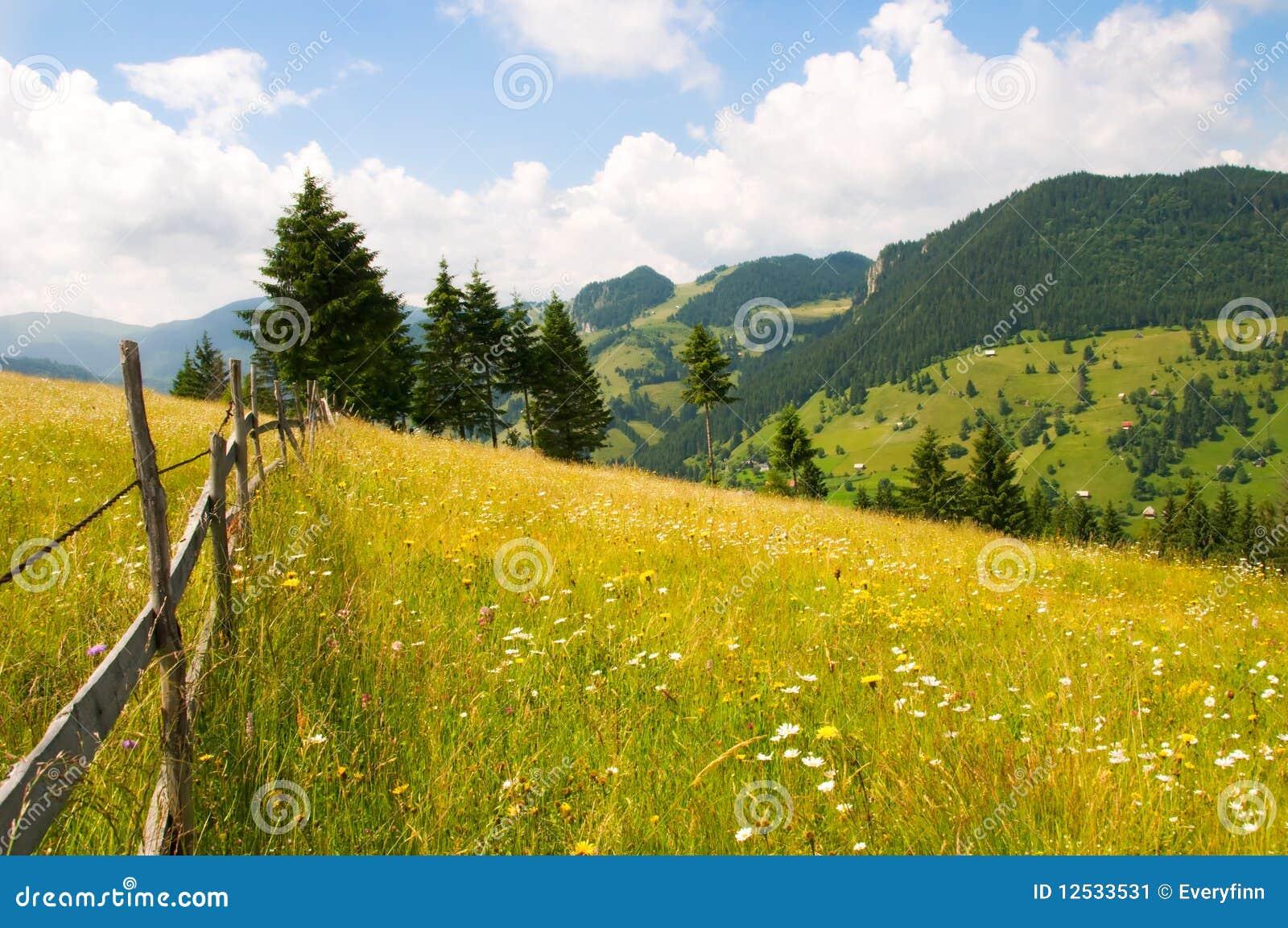 Grassfield