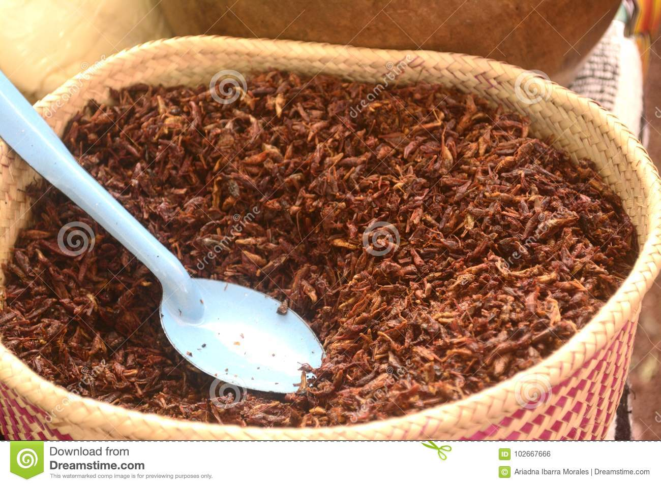 Grasshopers Fried For Sale In A Mexican Local Market, Delicious Insect Food Stock Photo