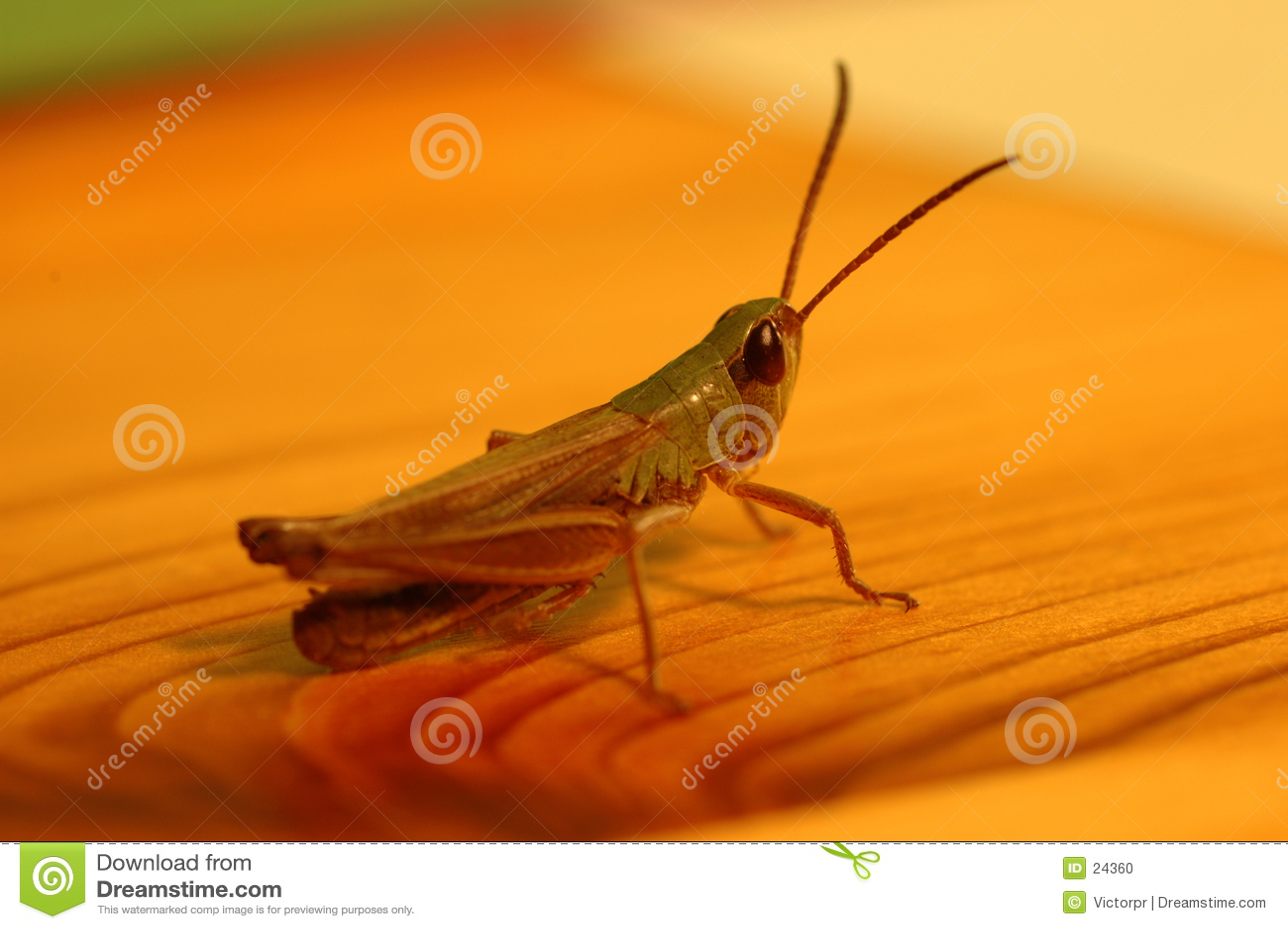 Grasshoppen tabellen