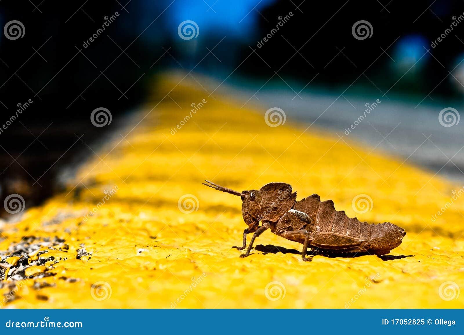 Grasshopper έναρξη γραμμών
