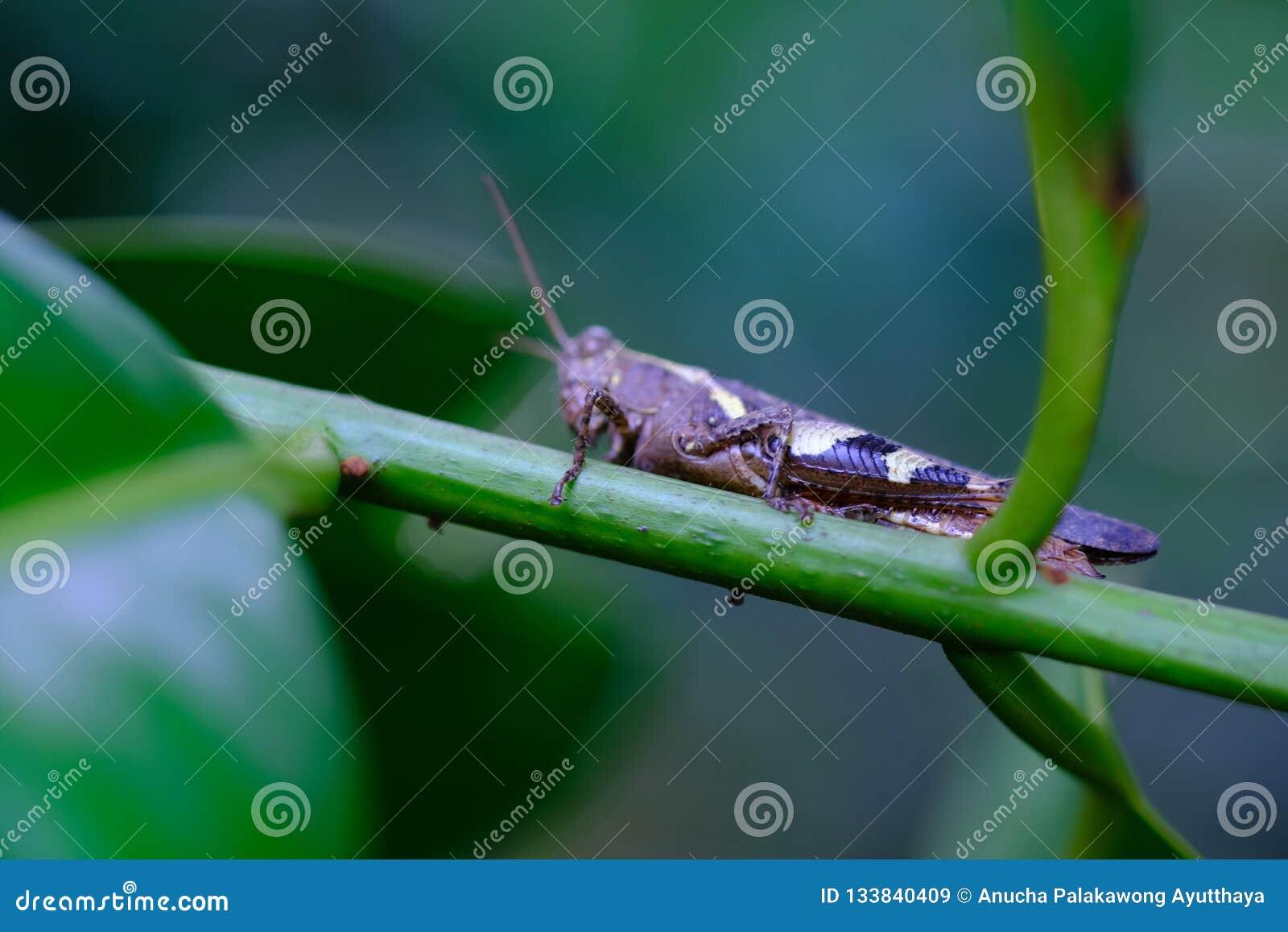 Grasshopper και βγάζει φύλλα