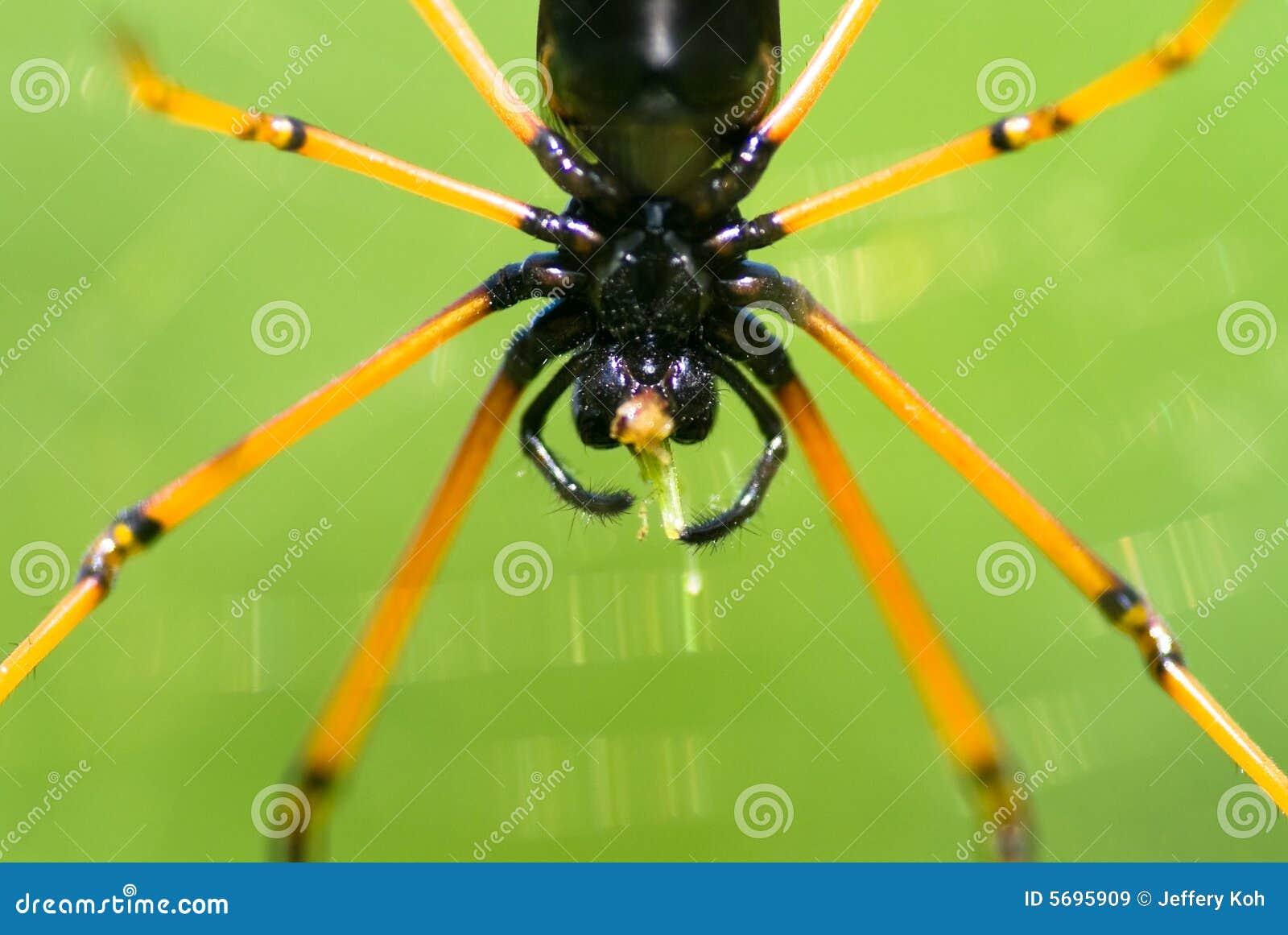 Grasshopper for lunch