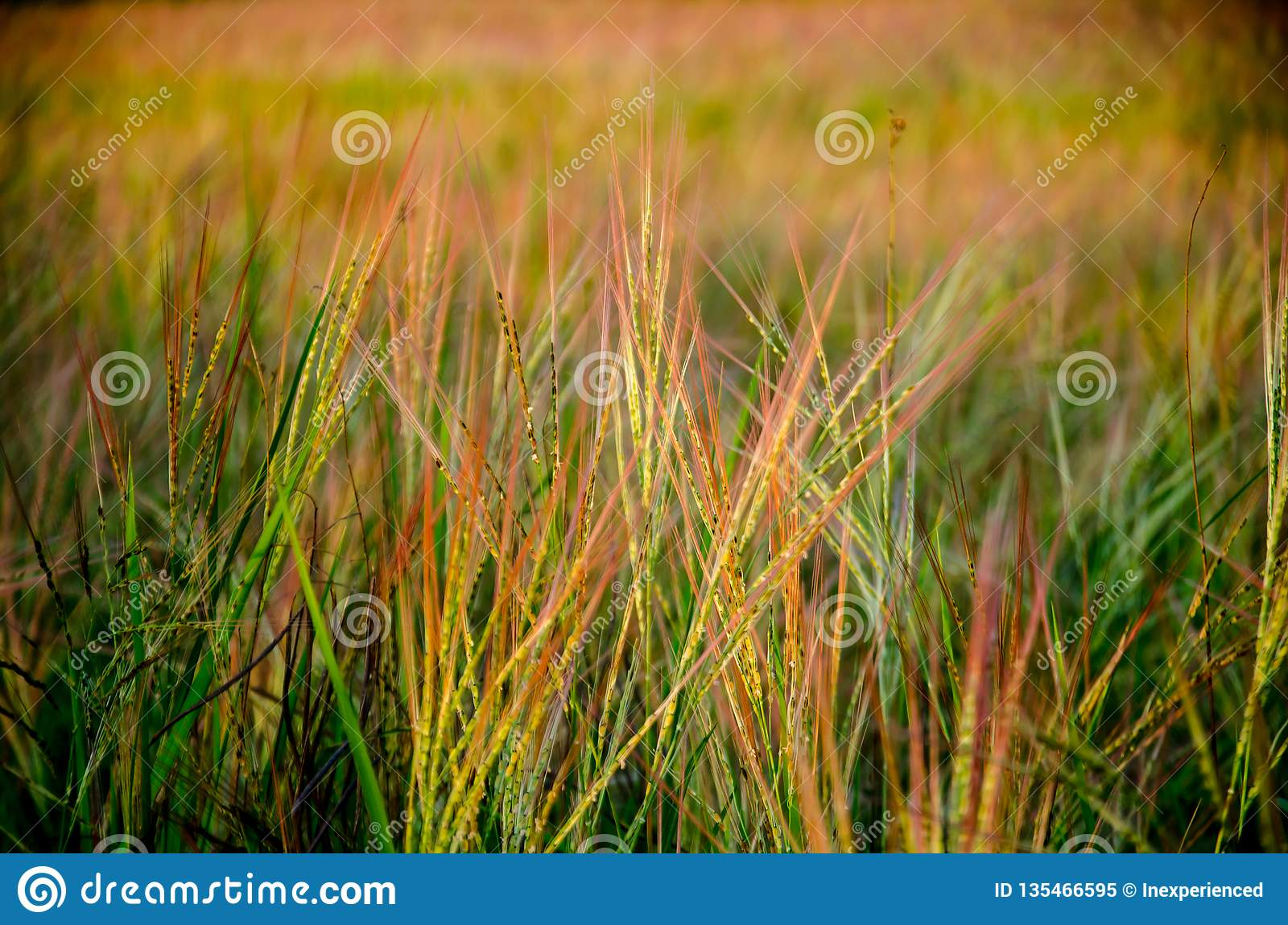 Grassland the first thing of life in Thailand