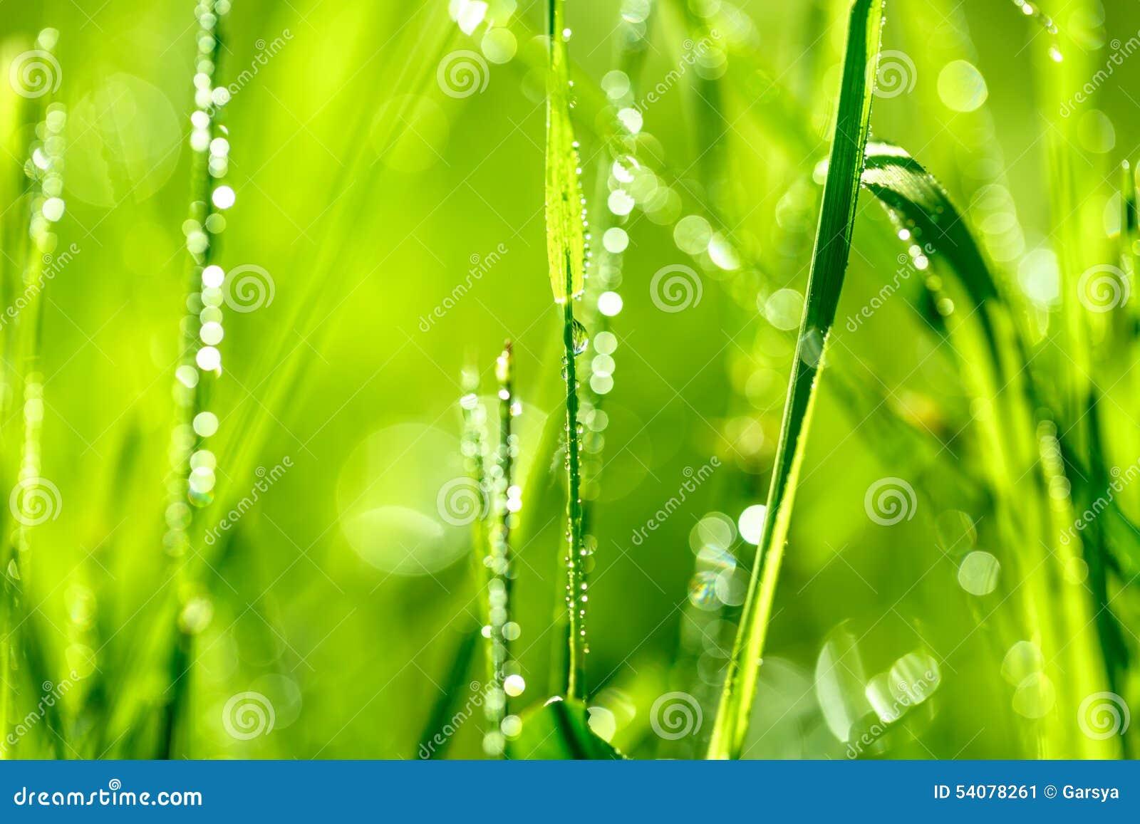 Grassprietje in ochtenddauw