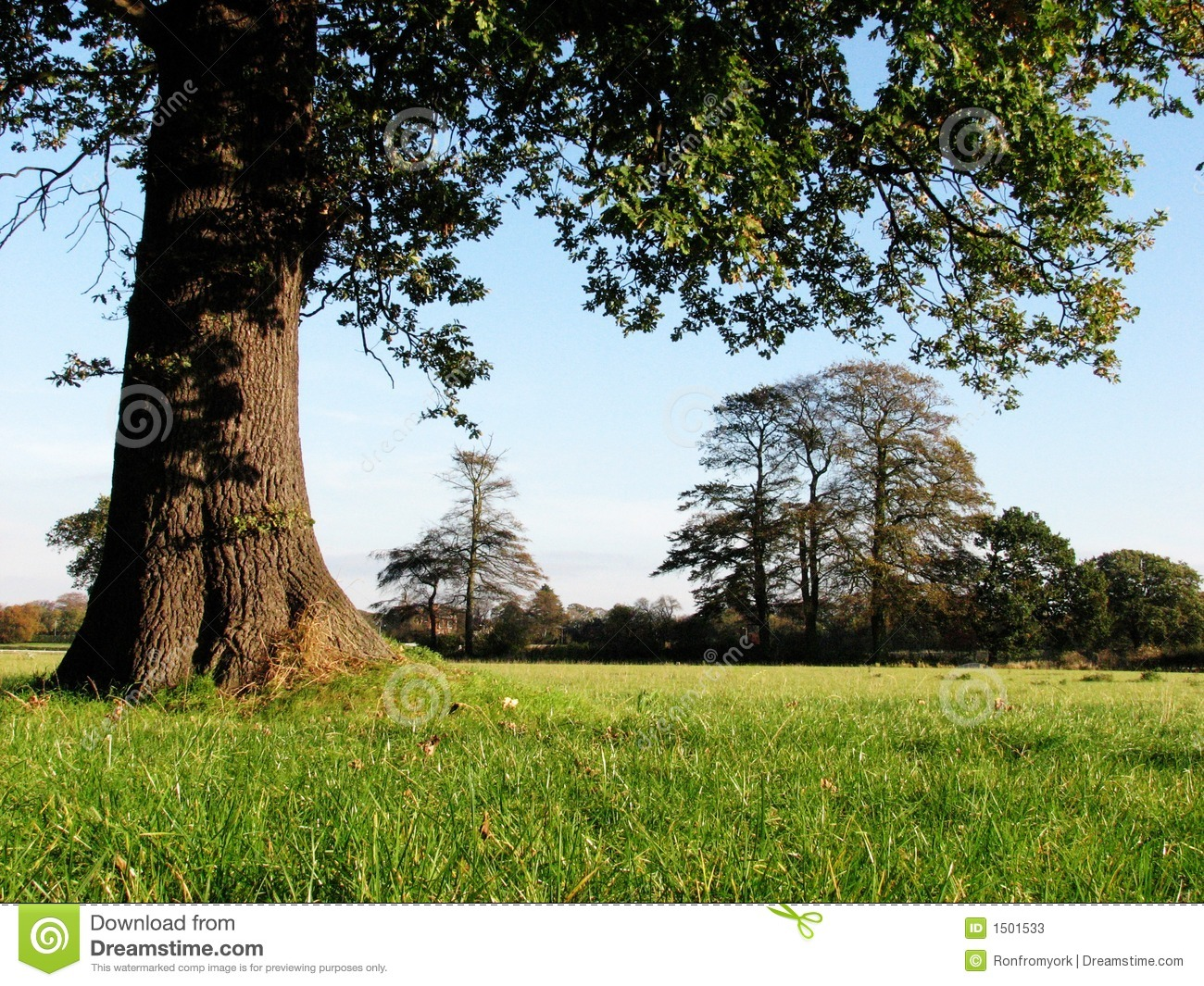 Grassy Field With Trees Stock Image. Image Of Seasons