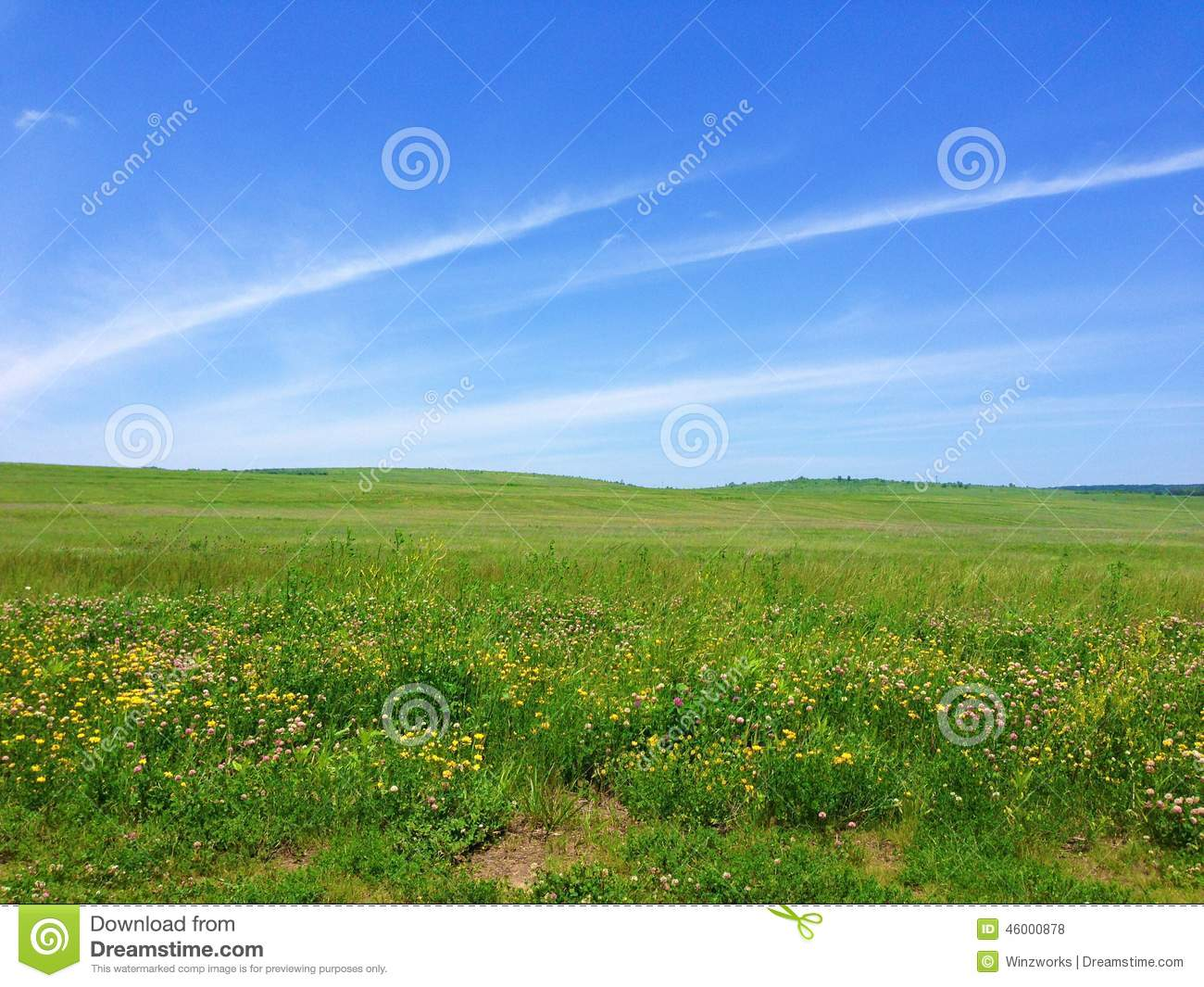 Grassy Meadow and blue sky