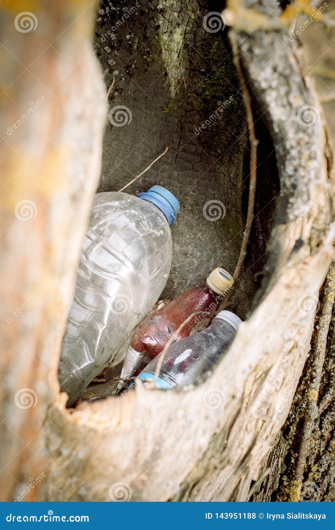Grat w pustym wydr??eniu drzewo natura znika natury ochrony poj?cie, ekologia Klingeryt butelki w lesie