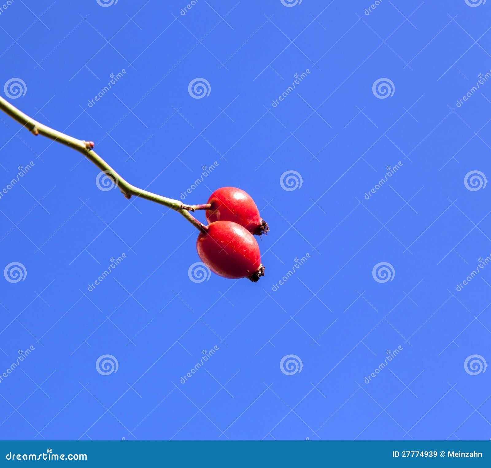 Gratte-cul rose rouge sous le ciel bleu