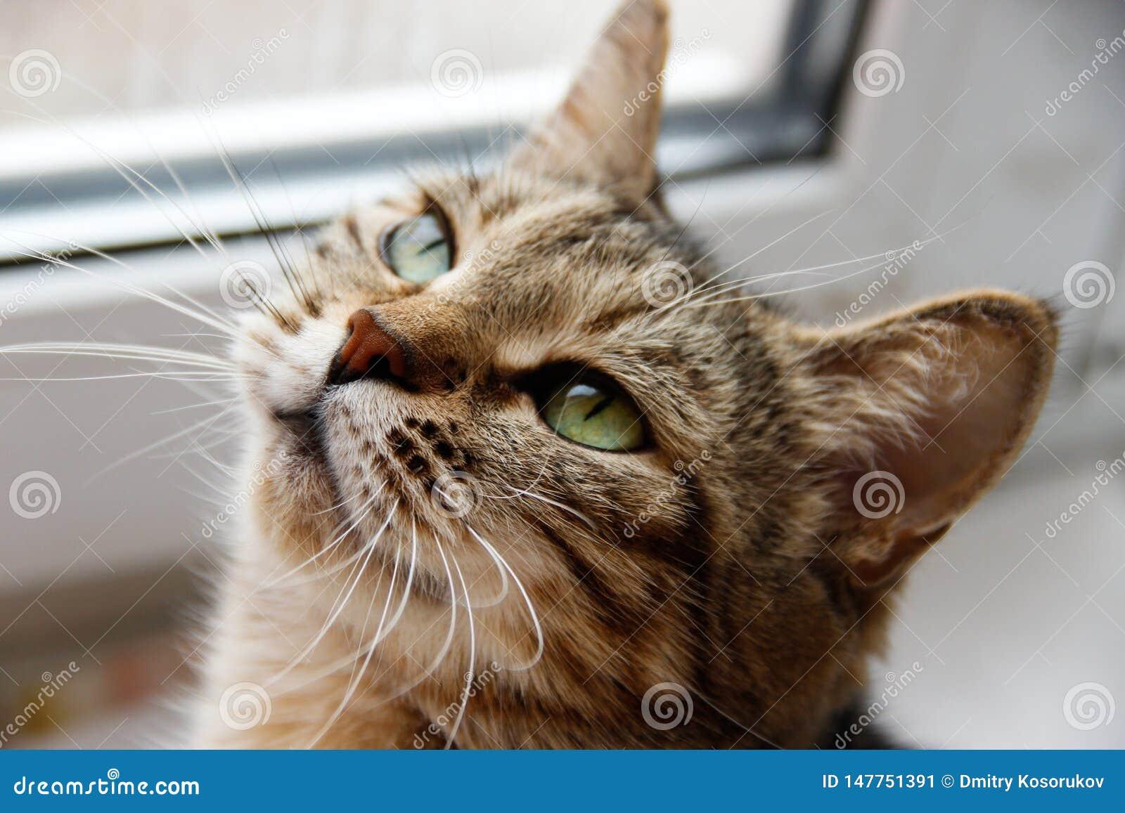 Graue Katze auf dem Fensterbrett